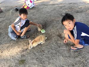 海水浴場のウサギ