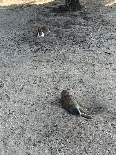 寝るウサギ後ろから