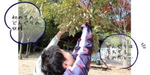木から実をとる