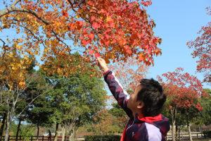 赤くなった葉